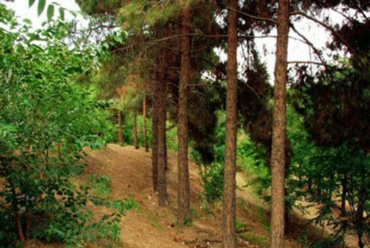 بوستان سوهانک
