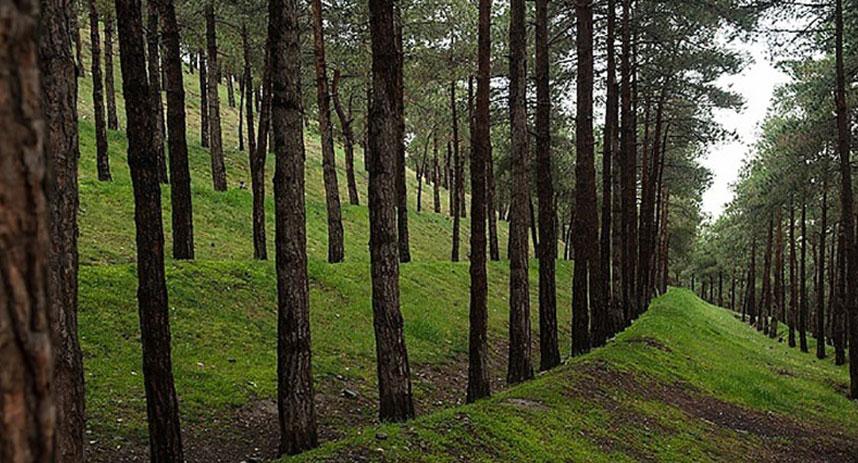 عکس پارک جنگلی سوهانک