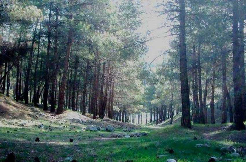 پارک-جنگلی-لویزان-تهران