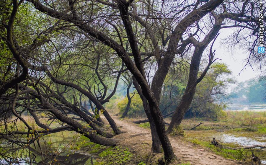 پارک توسکا